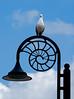 Herring Gull, Lyme Regis, May 18.