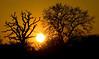 Woking sunset, April 2.